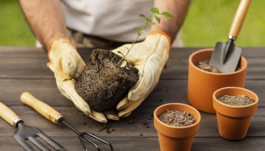 Troc-plantes : à vos boutures !